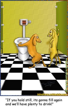 Dogs contemplating to drink water from an automatic toilet