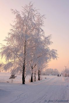 Winter by Anita Kryszkiewicz