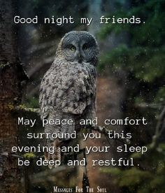 Good Night My Friend, Good Night Quotes, Months In A Year, Peace, Messages, Owls, Birds, Owl, Bird