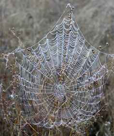Some organic #halloween decor we spotted at the ranch yesterday. #spiderweb #boo