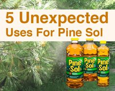 Unexpexted-uses-of-pine-sol: Homemade Fly Spray, Wasp Killer, Keep Pests Away,Pet Pee Deterrent,Stain Remover - Gardening For You