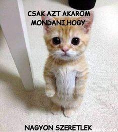 Meme creator - funny not even if i pleaded gill lol meme generator Sad Cat Meme, Cute Cat Memes, Funny Cute Cats, Fun Funny, Funny Animals, Memes Humor, Frases Humor, Funny Memes, Meme Meme