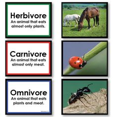 free powerpoint presentations about what animals eat carnivores