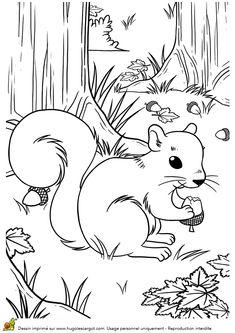 Coloriage / dessin automne petit ecureuil qui grignote