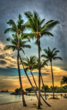 Different Aspects Of Nature Photography – PhotoTakes Beautiful Beach Pictures, Beautiful Sunset, Beautiful Beaches, Beautiful World, Image Deco, Palm Trees Beach, Beach Wallpaper, Wallpaper Wallpapers, Screen Wallpaper