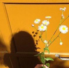 Flores ao vento...