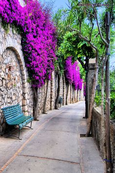Bougainvillea Flowers at Capri Island, Italy