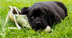 Here's what causes destructive dog chewing...