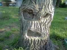 We hope you enjoy our next list of funny faces in everyday objects.Funny pictures of recognizable faces,Faces on things,Seeing faces in inanimate objects. Mad Face, Things With Faces, Crazy Faces, Weird Trees, Get Off My Lawn, Tree Faces, Face Pictures, Funny Pictures, Strange Places