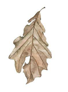 Acquarello botanico autunno quercia foglia marrone seppia Umber