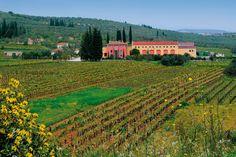 Lafazanis Winery http://nemeawineland.com/lafazanis-winery