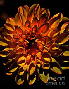 Glowing Tubes - photograph by Clare Bevan. Fine art prints for sale. #dahlia #interiordesign #clarebevan