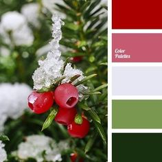 Color Palette Resource that helps you in color selection, specially created with this aim; it is the generator of Color Schemes Colour Palettes, Colour Pallette, Color Combos, Winter Color Palettes, Paleta Pantone, Dresser La Table, Christmas Palette, Christmas Color Scheme, Design Seeds