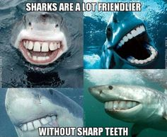 Image tagged in funny,animals,bizarre/oddities,sharks - Imgflip