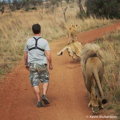 The Lion Whisperer, Kevin Richardson, with lions... | SanDisk | Telling Life's Stories from Memory™