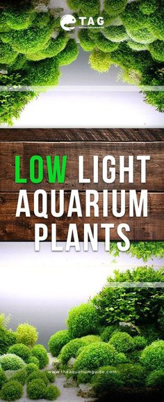 Check out some of the aquarium plants that does not require high powerful light . - Check out some of the aquarium plants that does not require high powerful light to strive in your freshwater aquarium setup. Planted Aquarium, Best Aquarium Fish, Aquarium Setup, Diy Aquarium, Aquarium Garden, Aquarium Landscape, Fish Aquariums, Aquarium Lighting, Freshwater Aquarium Plants