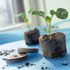 Starting seeds is the inexpensive way to grow more of your favorite plants. Here's what you need to know for success./