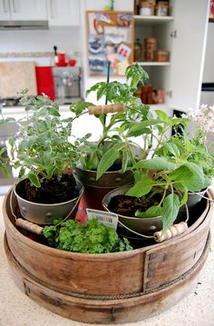 A  mini-herb garden is a great way to bring a small piece of the outdoors inside.