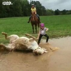A funny video make you die laughing. Funny animal v - Horses Funny - Funny Horse Meme - - A funny video make you die laughing. Funny Horse Videos, Funny Horse Pictures, Funny Horses, Cute Animal Videos, Funny Dogs, Cute Dogs, Horse Meme, Cute Animal Gif, Funny Videos Of Animals