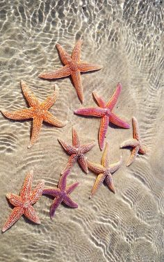 Starfish shared by Aaliyah Kinniburgh on We Heart It Beach Wallpaper, Summer Wallpaper, Cute Wallpaper Backgrounds, Cute Wallpapers, Iphone Wallpaper, Shells And Sand, Sea Shells, Photo Wall Collage, Picture Wall