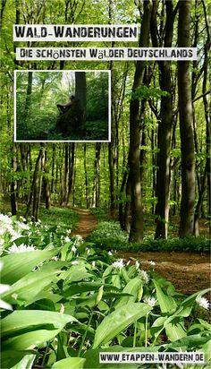 Ich bin gern im Wald. Zu jeder Jahreszeit. Mein Wanderhund Lotte auch. Während sie die Nase für gewöhnlich auf Höhe des Bodens trägt und die Fährten von Rotwild, Fuchs oder Wildschwein aufsaugt, zeigt meine Nase oft Richtung Himmel. Weil mein Blick in den Baumwipfeln den Geräuschen von Spechten, Greifvögeln und Eichelhähern folgt. Über 90 Milliarden Bäume wachsen in Deutschlands Wäldern. Meist ist der nächste Wald und damit ein Stück Wildnis nur einen Katzensprung entfernt. Herbs, Outdoor, Plants, Hotels, Wilderness, Recovery, Tours, Travel Advice, Hiking