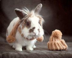winter cute bunny