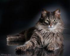 Brutal Cat by Vikarus.deviantart.com