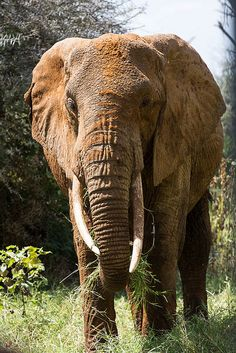 Orange Ellie by Ring a Ding Ding, via Flickr. We gain media sponsors by your metrics. Like ivoryforelephants on FB, help us work to save them.  The only one that needs a tusk is an Elephant.