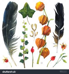 Watercolor Illustration With Branches, Leaves And Berries. Set Of Winter And Autumn Forest Plants And Feathers. Collection Of Herbarium Garden. Willow, Viburnum, Rosehips. - 494852290 : Shutterstock