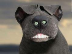 Nice dog !
