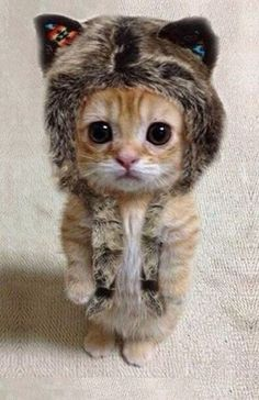 Winter Fashion Statements: The well-dressed kitten – who's not afraid to wear fur!