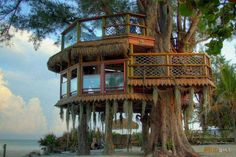 Tree house on the beach in Anna Maria Island, Florida Cool Tree Houses, Tree House Designs, Unusual Homes, In The Tree, Big Tree, Tree Tops, Play Houses, Cabana, Future House