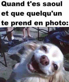 Je plaide coupable ! http://www.15heures.com/photos/j77A #LOL