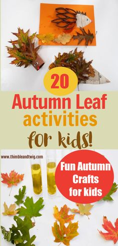 20 amazing and fun autumn activities for kids to do. Science Autumn leaf experiments and Autumn crafts for children to make with leaves. Easy Fall crafts for preschoolers and toddlers. Fun Autumn leaf activities for forest school or outdoor playgroups. Explore sensory autumn leaves and make a leaf hedgehog craft for kids. Leaf Crafts, Craft Stick Crafts, Preschool Crafts, Sensory Activities Toddlers, Autumn Activities For Kids, Easy Fall Crafts, Crafts For Kids To Make, Autumn Leaves Craft, Hedgehog Craft
