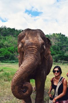 Elephant Nature Park. Walk alongside gentle giants