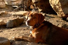 Brownie, the cave dog, won a pair of #FiveTen at the 2012 Dog Days of Summer Photo Contest #RockCreek