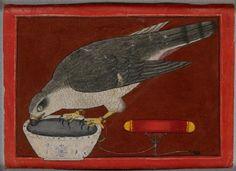 Style: Pahari; Type: Court life, urban life, and mythological scenes; Title: 'A goshawk drinking', Mandi, c. 1730
