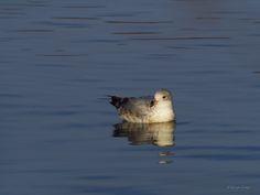 Floating... by Rodrigo Cornejo - Photo 130636451 - 500px