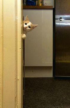 oh hey, do you mind? I'm on the phone in here...