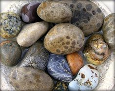 You can see several Petoskey stones. Others found around Lake Superior.