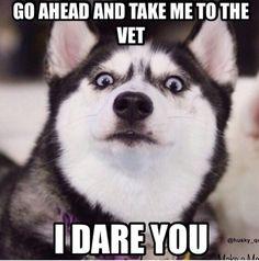 "Oh the husky look.  ""Go ahead, make my doggie day"""