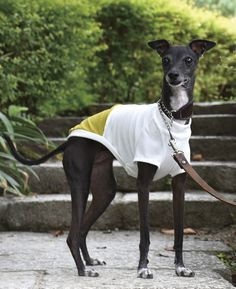 Italian Greyhound Clothes Cool T-shirt