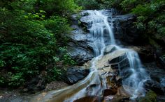 Cove Creek Falls - Nestled away amidst rocks and greenery you'll find the beautiful Cove Creek Falls. A real two-in-one is that it's only a short hike from the Pisgah Center for Wildlife Education. Perfect for the kiddos and adults too.