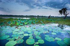 Yellow Water Cruises Kakadu National Park, Northern Territory - Places I have been too! Kakadu National Park, National Parks, Perth, Brisbane, Melbourne, Water Lilies, France, Trip Advisor, Cruises
