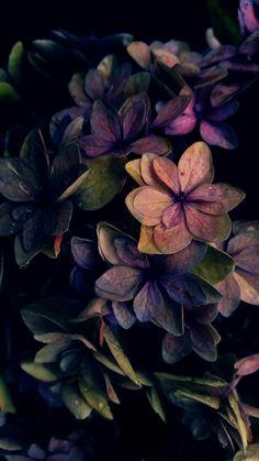 Hyper bunte gemalte Pappteller-Blumen - Bilder Huawei - - Madie U.