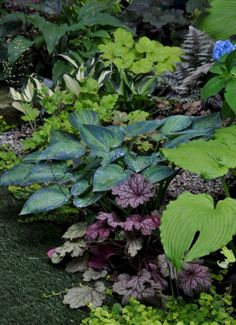My Favorite Plant Combinations 37