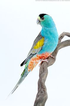 If the bird can rock these colors, so can my home...