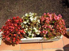 Plantas para zonas con mucho sol | Cuidar de tus plantas es facilisimo.com