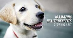 10 Amazing Health Benefits of Owning a Pet  -  If you're an animal lover, you've likely already considered how much a pet can improve your life. However, it's not just your mood that benefits--there's a fascinating range of scientific studies proving that the company of animals can have a significant impact on your physical well-being as well. Here are 10 of the most exciting ways in which owning a pet can improve your health.