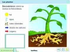 Conocemos las plantas en Educación Infantil
